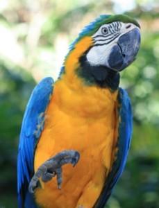 Guadeloupe - Jardin Botanique - mackaw