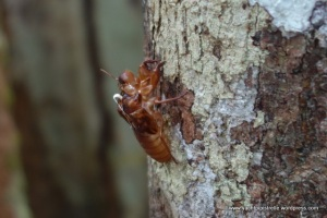 Insect clinging to tree trunk