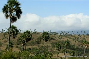 Hillside scene