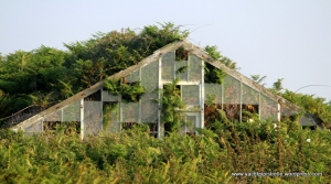 Dilapidated glasshouse - one of many on the island