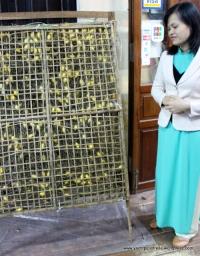Caged pupa