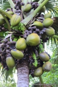 Bland fruit with interesting kernel