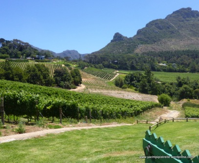 Constantia Glen Vineyard