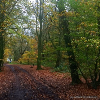Autumnal scene, Wellington near Taunton
