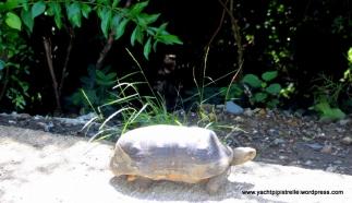 Tortoises roam free