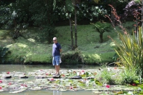 Amongst lilies on the bubbling lake!