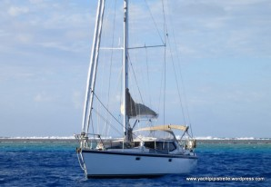 Pipistrelle at anchor