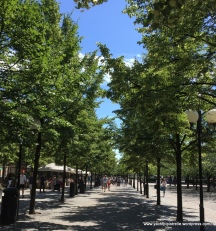 Long shady avenue