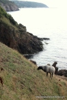 Craggy coastline
