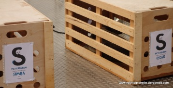 Well ventilated personalised crate